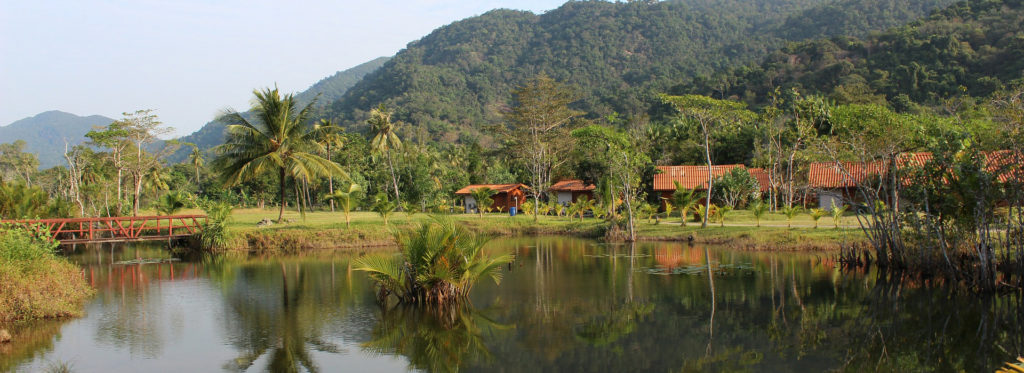 Village in the Amazon Rainforest