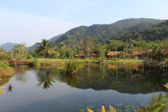 Lake in the Amazon Jungle