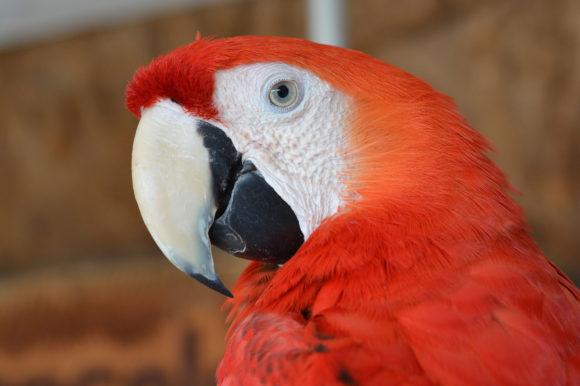 Amazon rainforest bird