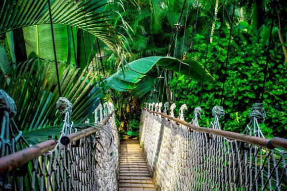 Suspension bridge Amazon