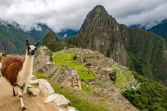 Llama Machu Picchu Cusco Peru