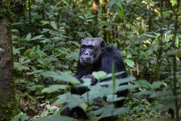 Gorilla sitting under trees