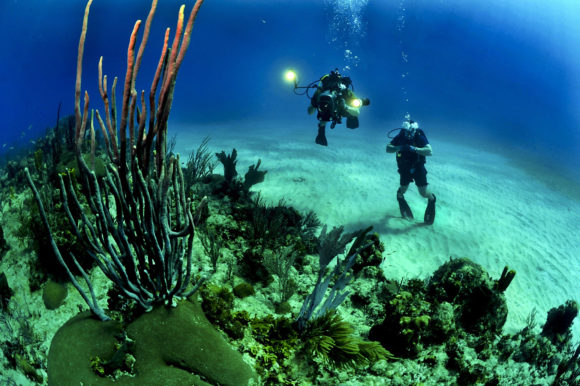 Diving in South Africa