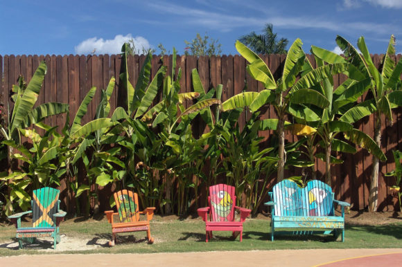 Cape cod chairs in Jamaica