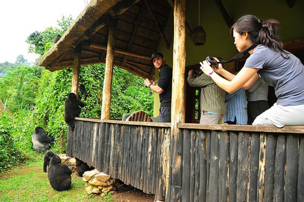 Woman taking photos of gorilla