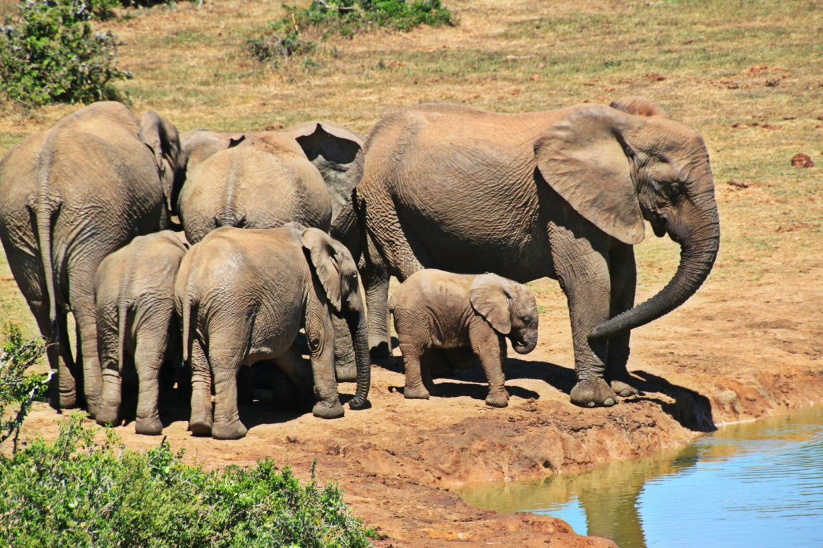 African Wildlife Care Expedition
