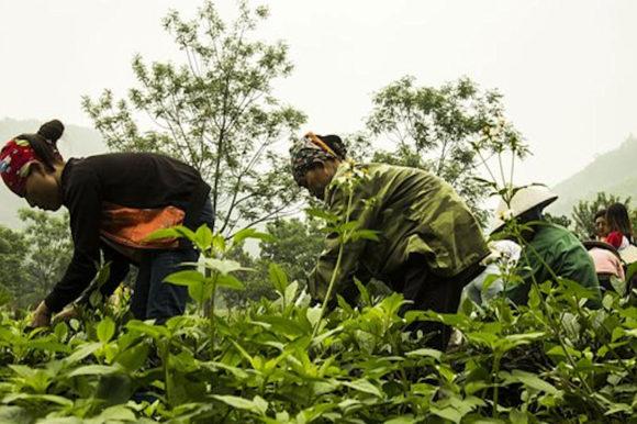 Vietnam workers